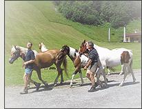 Sommerurlaub in Salzburg - Ab in die Sommerfrische!